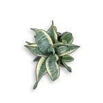 2d-plants